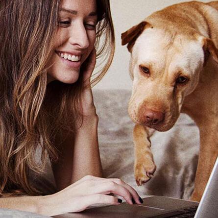 woman and dog looking at computer